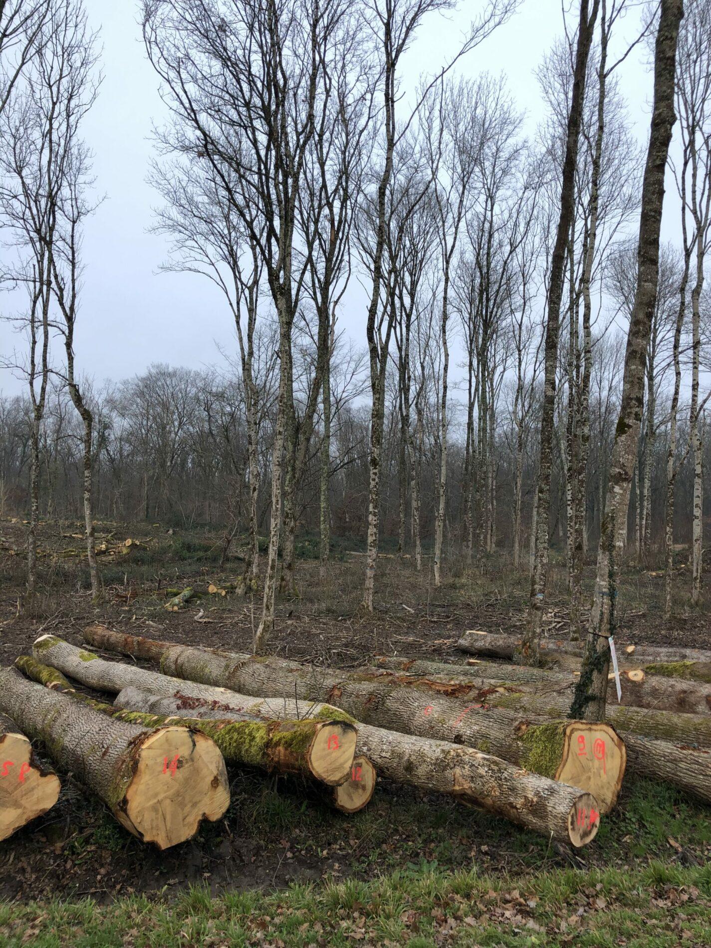 exploitation forestière Roman Bois