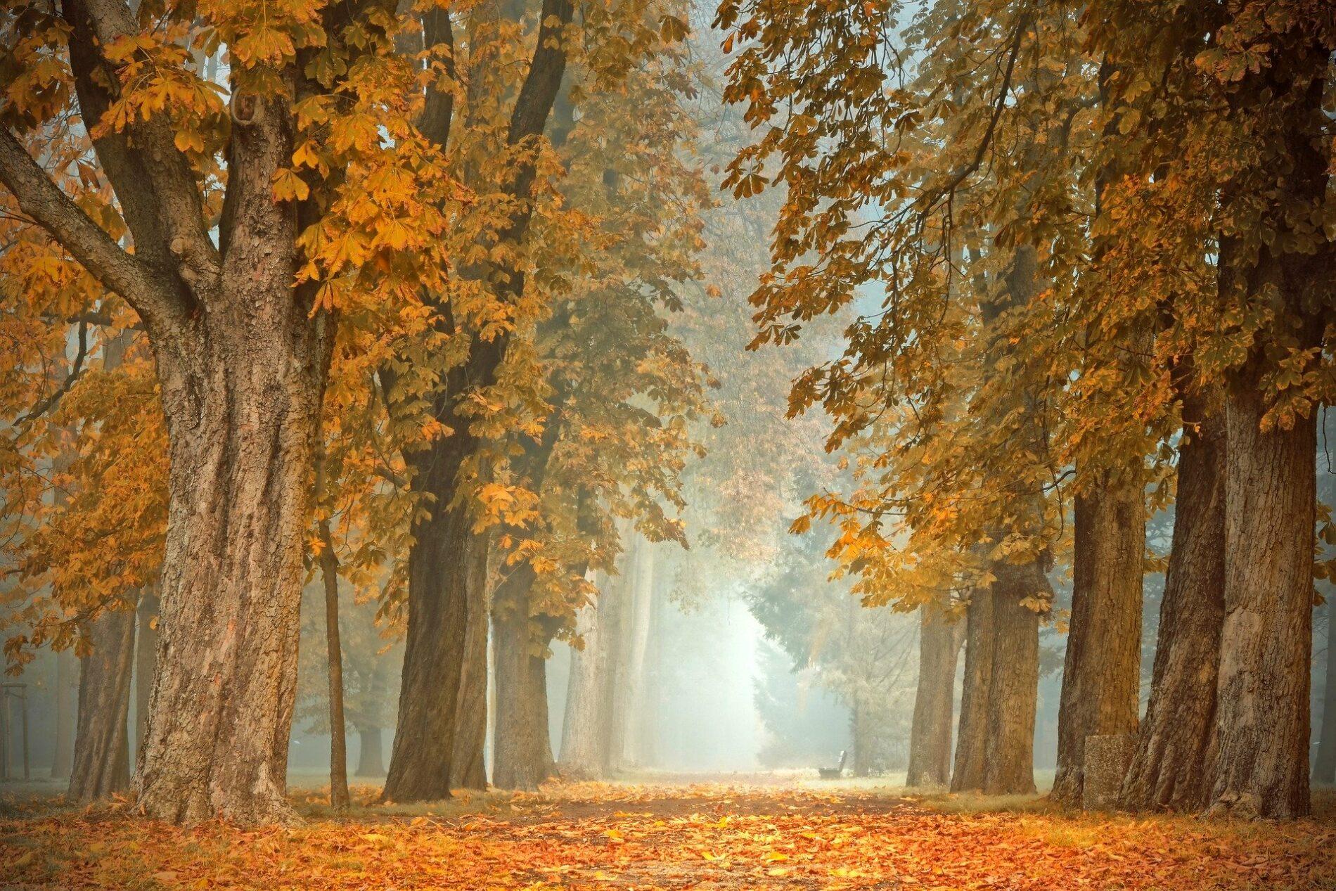 bois de chauffage Roman Bois