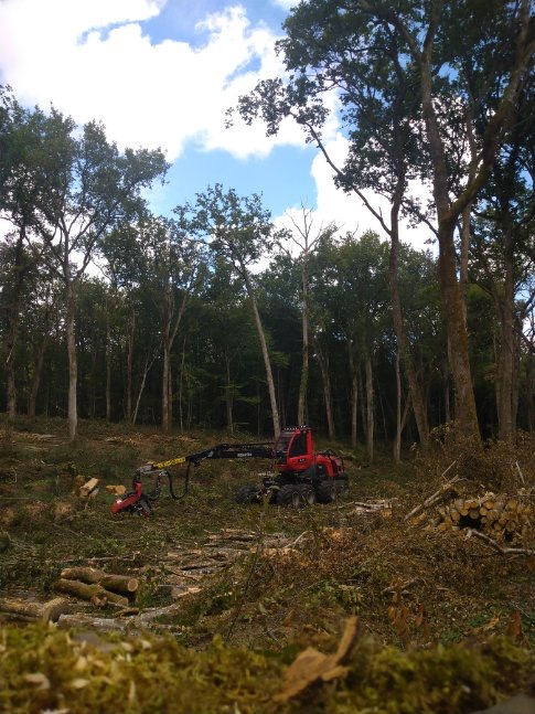travaux forestiers pefc onf forêt privée plants pin sciage