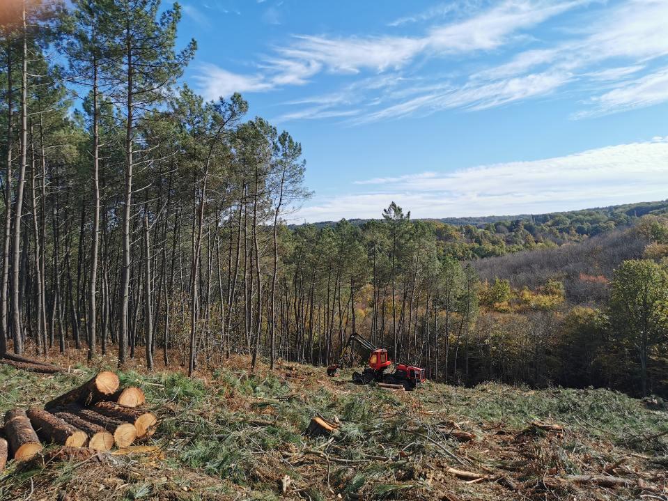 exploitation sylvicole bugey comté propriété forestière office national scieries gestion durable de la forêt couvre